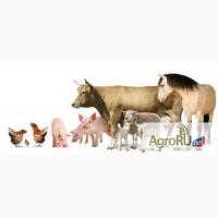 Сапропелевые кормовые добавки для животных и птиц