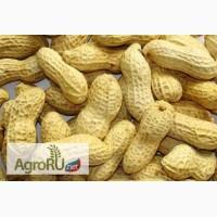 Продаем арахис в скорлупе