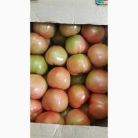 Продам: помидоры сорт Таймыр