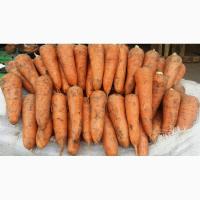Семена моркови Кардоба