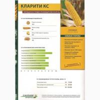Гибридные семена кукурузы Кларити КС