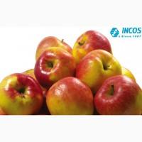 Концентрированное яблочное пюре