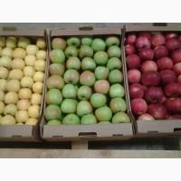 Яблоки Кристин