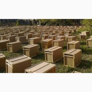 Продам пчелопакеты с в Абакане