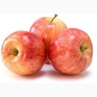 Яблоки свежий урожай 2020