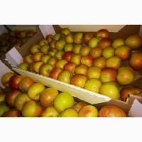 Яблоки Фуджи, сорт 1, калибр 75-80+. от 10 тонн. в картонном лотке 60х40, вес 13-15кг
