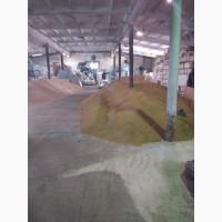 Очистка, сортировка семян многолетних трав