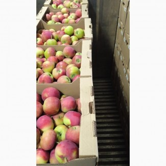 Яблоко Женева оптом от производителя