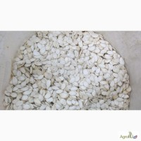 Продаем тыквенные семечки в скорлупе белые