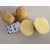 Купим картофель урожай 2018 года из Египта и других стран