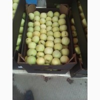 Продам яблоко белый налив