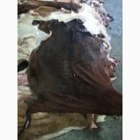 Продаем шкуры козы