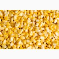 Кукуруза фасованная
