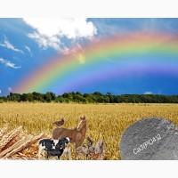 Кормовая добавка для баланса рационов с/х животных и птиц