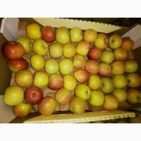 Яблоки Фуджи, сорт 1, калибр 65-70 от 10 тонн в картонном лотке 60х40, вес 13-15кг мытые