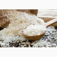 Кубанский круглозерный рис 1 сорт
