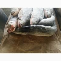 ООО Сантарин, продаёт, тушенку ГОСТ, В/С, рыбные консервы(горбуша)