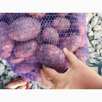 Картофель оптом, калибр 5+ от 5.5 руб/кг