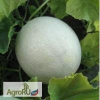 Семена дыни МИРА F1 (KS 7037) фирмы Китано