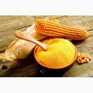 Мука кукурузная (светлая, желтая, яркая, белая)