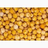 Продаем фуражный горох ООО НПП «Зарайские семена