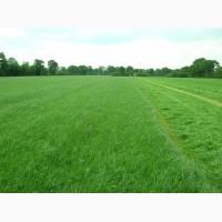 Продажа травосмеси для пастбищ, заготовки сена и сенажа оптом и в розницу