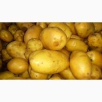 Продаем картофель 2 сорт