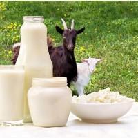 Йогурт и другие продукты из молока козы