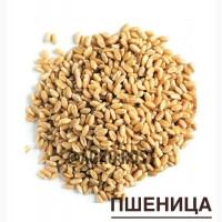 Пшеница 3, 5 класс