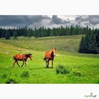 Лошади, быки(Торбоки)