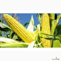Гибриды семена кукурузы МОНСАНТО ДКС 3511 (ФАО 330), ДКС 4014 (ФАО 340)
