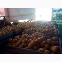 Абхазские мандарины прямо с плантации по самой выгодной цене