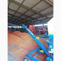 Услуги по протравливанию и предпосевной обработке семян протравителем ПС-20