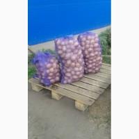 Купим картофель мытый и не мытый до 3000 тонн