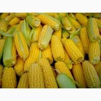Поставим кукурузу