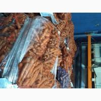Морковь оптом из Татарстана напрямую со склада КФХозяйства