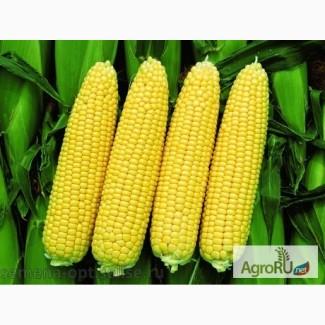 Семена гибриды кукурузы Pioneer ПР39Г12 (ФАО 200)