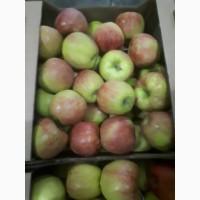 Яблоко джонаголд оптом