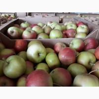 Реализуем Яблоки оптом от 10 тонн. На прямую от производителя