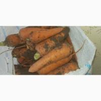 Морковь 2 сорт