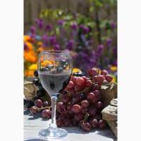Виноград амурский потапенко красный