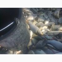 Малек рыб