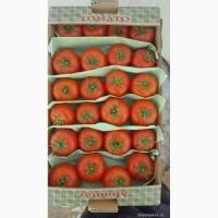 Предлагаем к приобретению высококачественные помидоры сорта Ламия