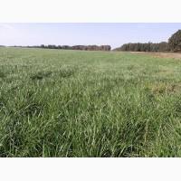 Продажа кормовых травосмесей для закладки сенокосов и долголетних культурных пастбищ