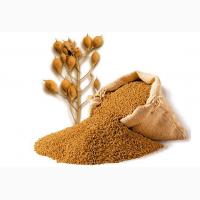 Семена озимого рыжика