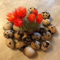 Инкубационные яйца перепелов - Фараона, Краснодар