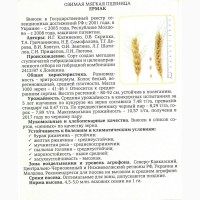 Продаём семена озимой пшеницы