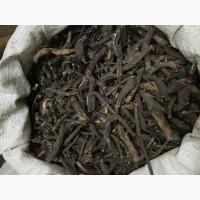 Кровохлебка (корень) Алтайский (оптом от 5кг)