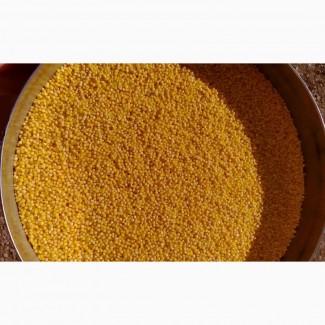 Закупаем продовольственную кукурузу ПФО, ЮФО, ЦФО от производителя