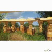 Пчеломатки БакфастF1 В158(TR)